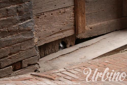 Urbino and the cat