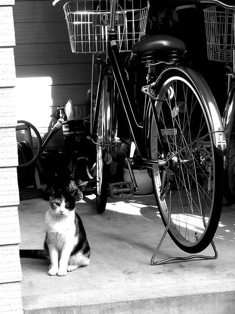 Today's Cat@2011-01-03