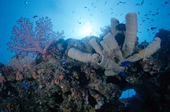 Bali diving Dive Concepts_025