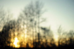 park sunset (~aspidistra~) Tags: