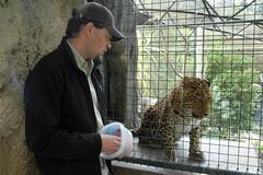 Todd and Jama (jemaha) Tags: sandiego zookeeper sandiegozoo chineseleopard endangeredbigcats