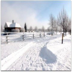 SNOW- NEIGE (Lara-queen) Tags: winter snow canada quebec hiver neige estrie theworldwelivein fantasticnature impressedbeauty platinumheartaward platinumheartawards quynhvu platinumhearthalloffame flickraward platinumheartawardhalloffame laraqueen janvier2011 artistoftheyearlevel3