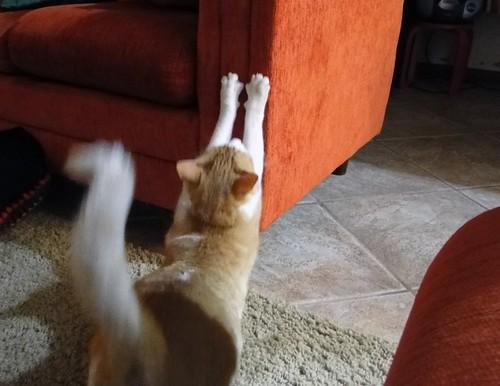 Pilates felino
