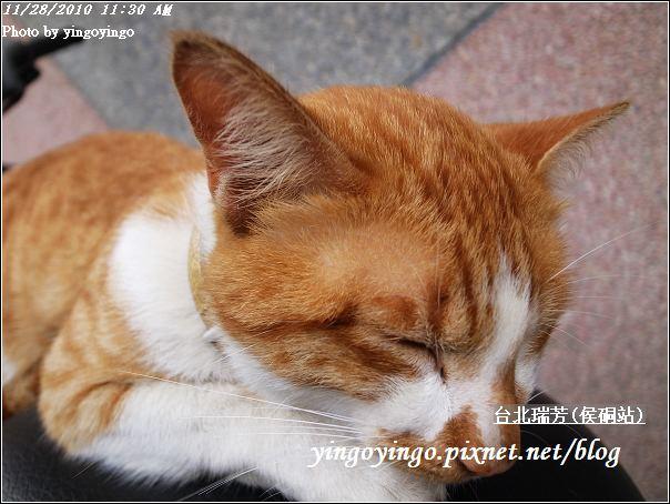 台北瑞芳(侯硐站)20101128_R0016247