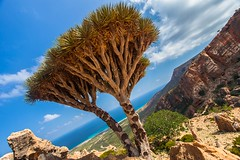 Homhill, garden full of bottles and dragon's blood trees, Soqotra Island, UNESCO, yemen (anthony pappone photography) Tags: pictures travel trees plants plant color tree nature colors digital canon lens landscape island photography photo flora colorful colours colore foto image natur picture culture natura unesco arabia yemen fotografia albero paesaggio reportage photograher pianta dracaenadraco arabo yemeni phototravel yaman dracena medioriente draceana socotra arabie arabiafelix arabieheureuse اليمن arabianpeninsula cinnabari يمني 也門 سقطرى сокотра alyaman yemenpicture yemenpictures eos5dmarkii 索科特拉 alberodelsanguedidrago dracenacinnabari ソコトラ सोकोट्रा