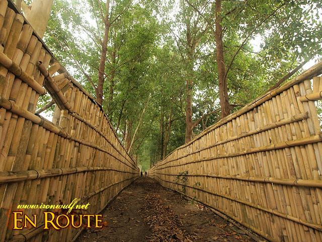 Bird Hide Trail Path