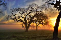 coyote valley (buffalo_jbs01) Tags: trees tree fog night sunrise oak cloudy coyotevalley greatphotographers abigfave flickrdiamond d3s nikonflickraward 100commentgroup artofimages bestcapturesaoi elitegalleryaoi oaksinfog