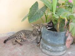Cat and Kitten_4522