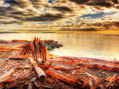 Honor the Earth (ZedZaP) Tags: ocean winter sunset sea sky beach photoshop bay bc logs logging vancouverisland hdr highdynamicrange victoriabc clearcut deforestation photomatix topazadjust zedzap