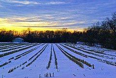 Farmland Winter (Doug Wallick) Tags: trees winter sunset snow building wisconsin colorful farm rows vegetation couds picnik lightroom ripon a230 mygearandmepremium mygearandmebronze mygearandmesilver mygearandmegold