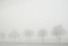 IMG_1921 (kaneko_ryo) Tags: winter  eos5dmark paris