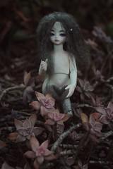 (aisu10) Tags: ball asian md doll dolls bjd soom gems abjd monthly gem minette teenie jointed drey dollsoom dreymandi unikenta unicenta