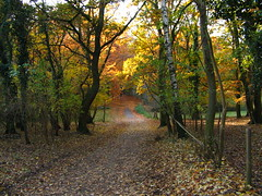 Herfstkleuren . . . (willem_huwae) Tags: canon maastricht bomen groen herfst sint bos geel pieter bladeren img0127 willemhuwae