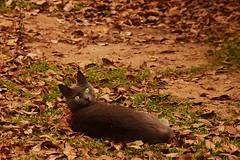 For Irene (MrMojoRisin43) Tags: cat kitten irene hernndez amor