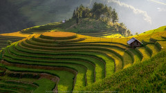 Terraced (KRW_GNS) Tags: agriculture asean asia asian beautiful curve earth ecology environment farm farming field fields food green harvest hill kids land landscape mountain nature paddy plant plantation ray rice rough rural sunlight sunset terrace terraced tourism travel twilight valley vietnam ynbi vn