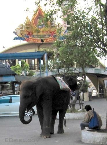 elephant ferry