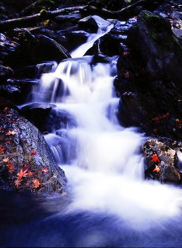 フリー写真素材, 自然・風景, 滝, カエデ・モミジ,