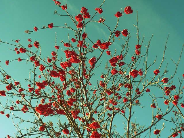 branches and berries