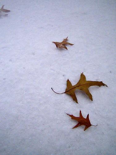 oak fallen