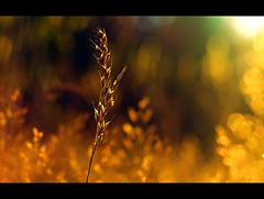lach mal (~janne) Tags: light summer sun grass 50mm sommer wiese olympus gras sonne wetzlar leitz janusz summiluxr e520 ziob