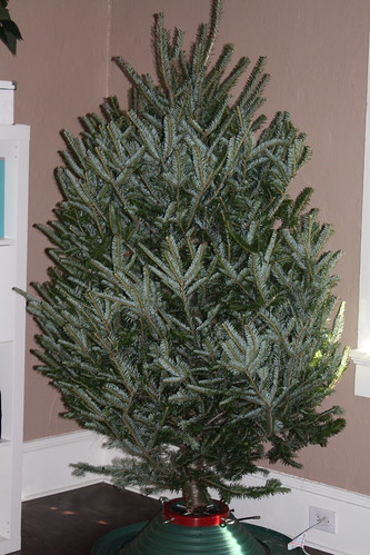 Black Friday Tree Deal at The Home Depot