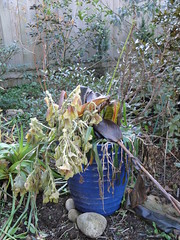 Seasonal Container after cold snap