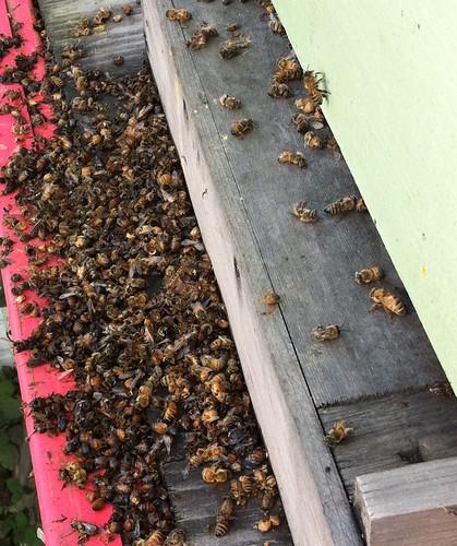 Bee Kill
