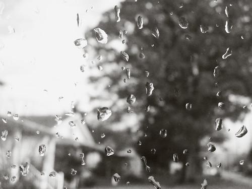 Broccoli Head Tree on a Rainy Day