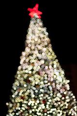 xmas tree (potential past) Tags: sf sanfrancisco xmas city tree night dark nikon bokeh unionsquare d90 dspw122010