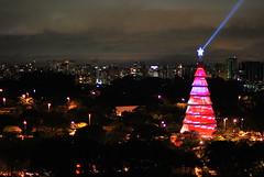 Ibirapuera Christmas Tree (Raffa,Ella) Tags: park christmas parque light tree luz yellow natal night star estrela noite arvore paraiso