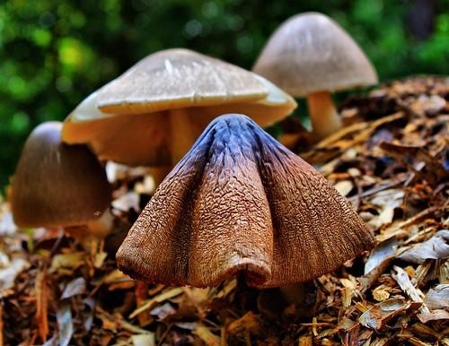HDR Mushroom
