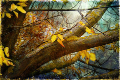 Otoo (DSC_3888) (Jos Luis Prez Navarro) Tags: autumn naturaleza tree fall texture textura nature leaves hojas nikon natura otoo retouch feuilles 2007 tardor d60 retoque nikond60 specialtouch blacky2007 platinumheartaward treesdiestandingup josluisprez platinumpeaceaward imageourtime