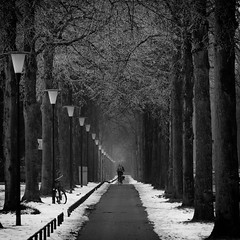 Winter lane (Edwin van Nuil Photography) Tags: trees winter snow bicycle frost lane apeldoorn ef100mmf28macrousm