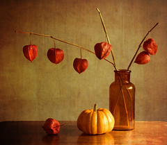 Chinese Lanterns (cbfarrell2003) Tags: flowers autumn stilllife brown fall texture monochrome yellow pumpkin gold golden seed squash dried tabletop pods chineselanterns