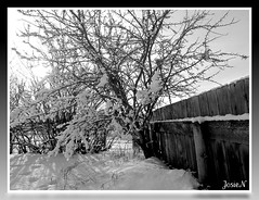White Christmas (JosieN2010) Tags: trees sky blackandwhite bw white snow canada cold tree fence december alberta 2010 winterweather winterday coldwinterday treescoveredinsnow colddecemberday