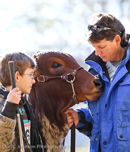 Terrell FFA Holiday Heifer Show-2192