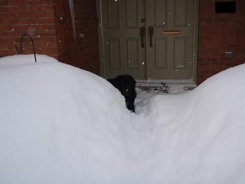 10.12.18.BlogPic.Snowmageddon.DrakeInBank