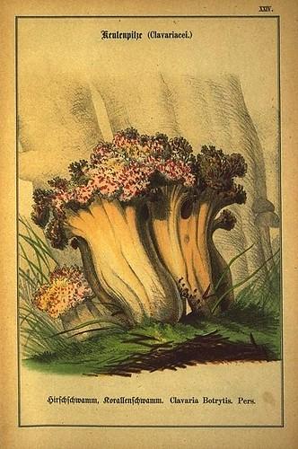 002-Allgemein verbreitete eßbare und schädliche Pilze 1876- Wilhelm von Ahles