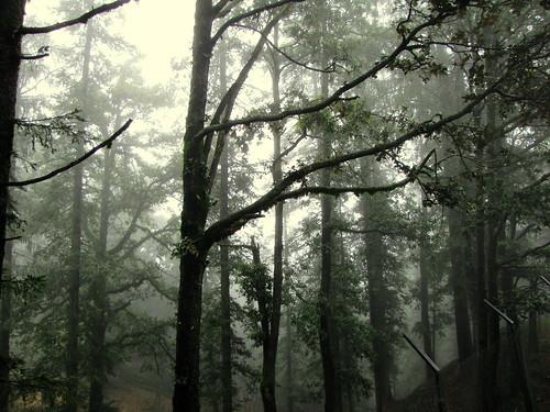 フリー写真素材, 自然・風景, 樹木, 森林, 霧・霞,