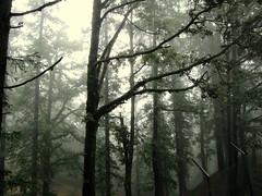 [フリー画像] 自然・風景, 樹木, 森林, 霧・霞, 201012250700