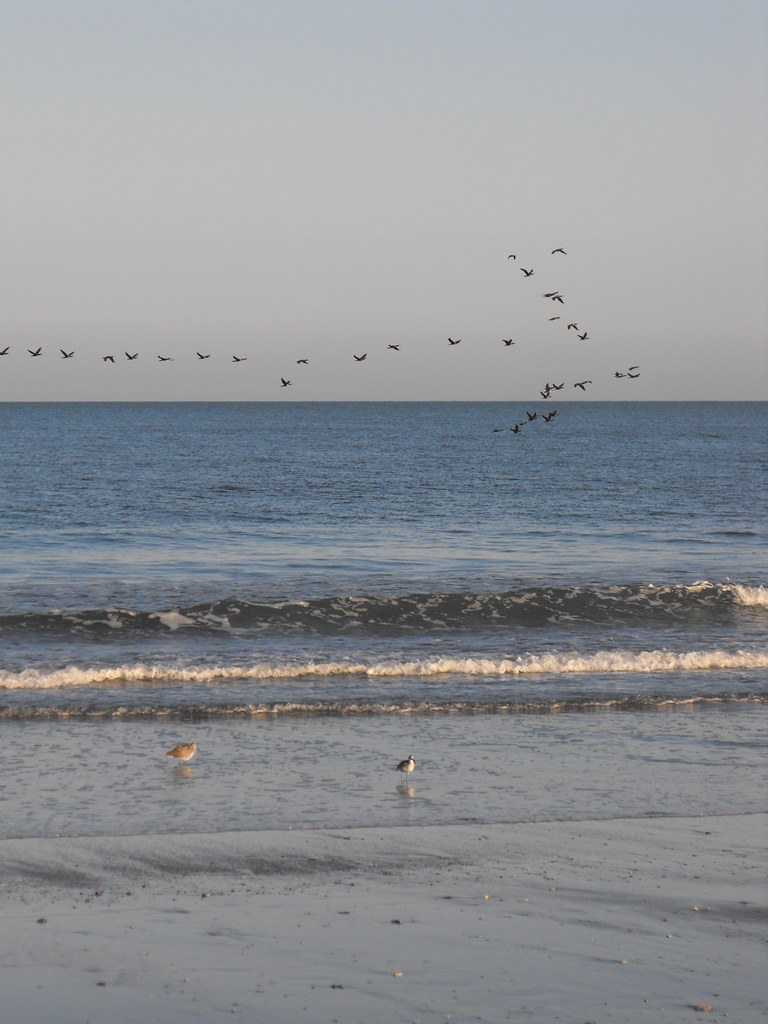 Migration over Wild Beach