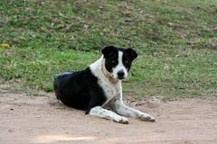 Me & my Temple *2 (Helene,Dolly,Naya) Tags: morning dog sun temple asia cambodge cambodia asie siemreap angkor