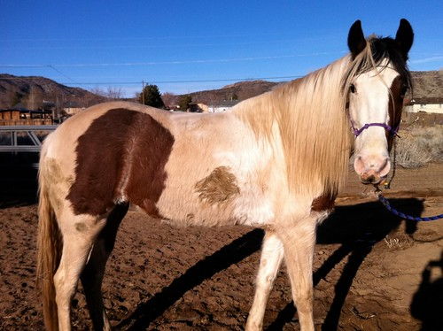 Big ole horse