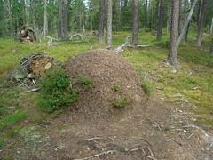 CIMG1536 (AmyFromTheCourt) Tags: arte natura case uccelli finestra fiori piante castello montagna macchina gabbiano alvaraalto renne finlandia babbonatale roccie circolopolareartico