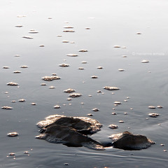 bubbles (marianna armata) Tags: sunset lake ice water rocks bubbles