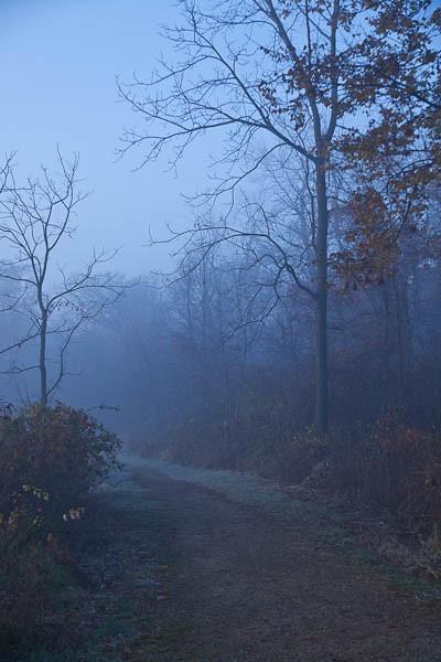In a Blue Fog