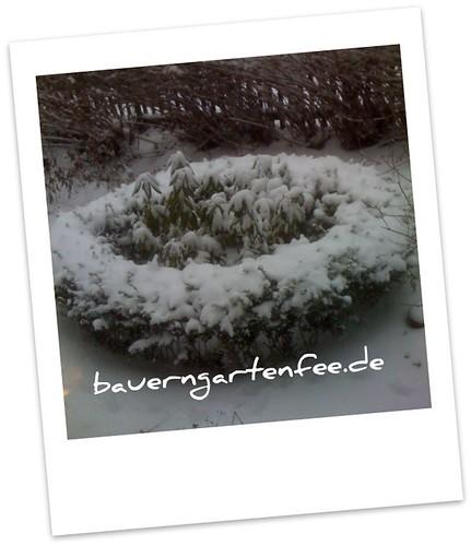 Verschneites Buchsoval im Vorgarten Dezember 2010