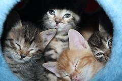 IMG_1541 (jack:)) Tags: cats cute animals cat kitten chat sweet lovely belli gatto gatti animali dolci gattino gatta gattini bellissimi teneri puffolosi tenerotti