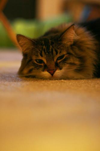 Jan 07 - Sleepy Kitty
