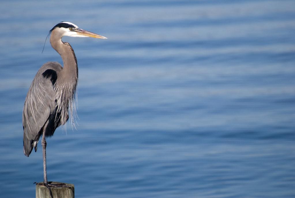 212: The Stork